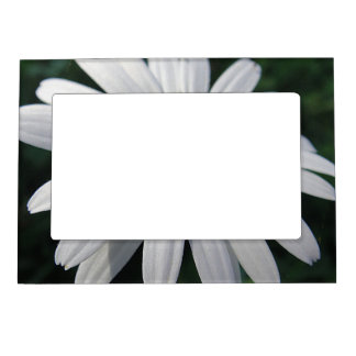 Picture frame white daisy frame magnets