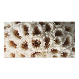 Picture of Coral. Photo Card Template