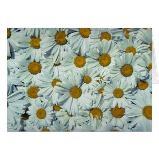 Picture of Daisies Greeting Card