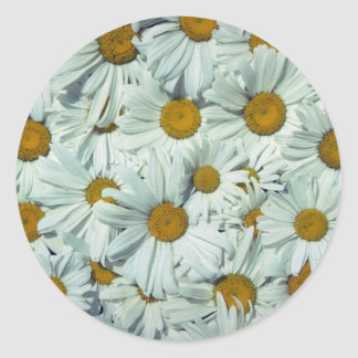 Picture of Daisies Sticker