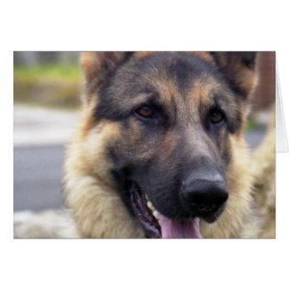 Picture of German Shepherd  Greeting Card