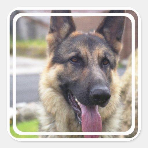 Picture of German Shepherd  Stickers