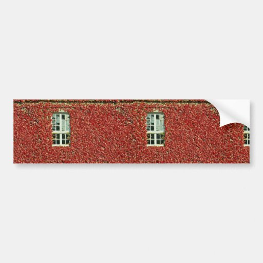 Picture of Ivy on building wall with single window Bumper Sticker