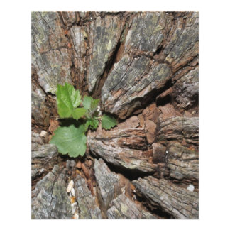 Picture of Old Wood with Plant. Flyer Design