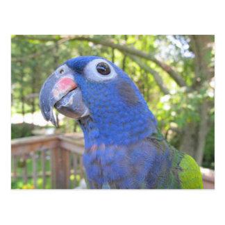 Pie The Parrot Postcard