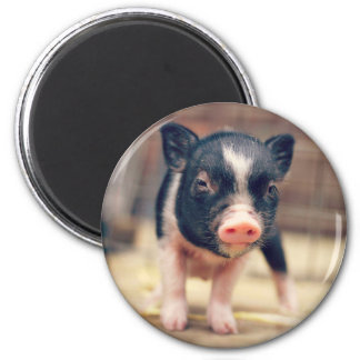 Piebald Pig puppy for Pig Lovers 6 Cm Round Magnet