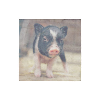 Piebald Pig puppy for Pig Lovers Stone Magnet