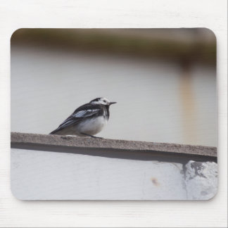 Pied Wagtail Mouse Pad