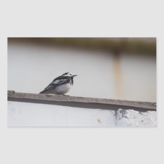 Pied Wagtail Rectangular Sticker