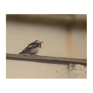 Pied Wagtail Wood Wall Decor