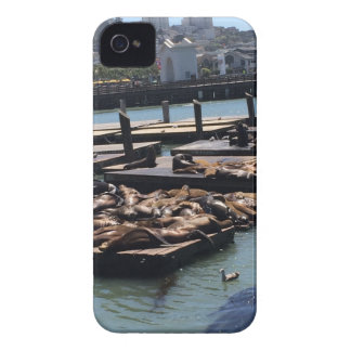 Pier 39 San Francisco California iPhone 4 Covers