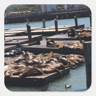 Pier 39 San Francisco California Square Sticker
