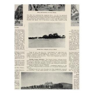 Piezzi Ranch, Harris Vineyard, California Postcard