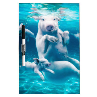 Pig beach - swimming pigs - funny pig dry erase board