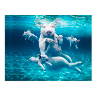 Pig beach - swimming pigs - funny pig postcard