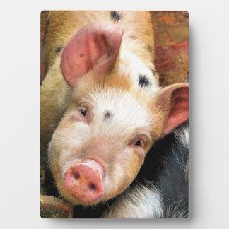 PIG DISPLAY PLAQUE