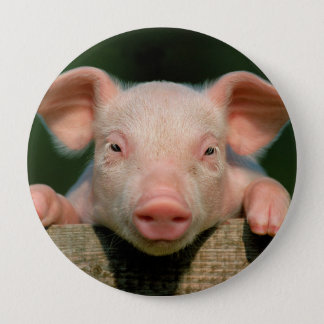 Pig farm - pig face 10 cm round badge