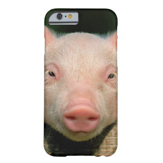 Pig farm - pig face barely there iPhone 6 case