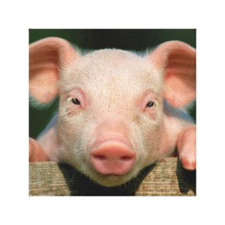 Pig farm - pig face canvas print