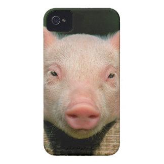 Pig farm - pig face Case-Mate iPhone 4 cases