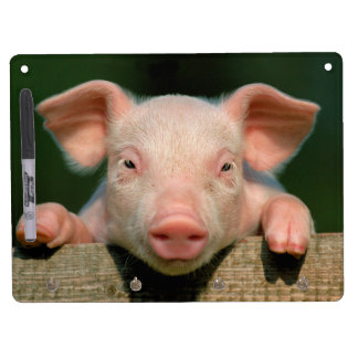 Pig farm - pig face dry erase board with key ring holder