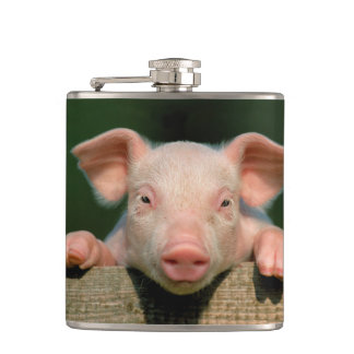 Pig farm - pig face hip flask