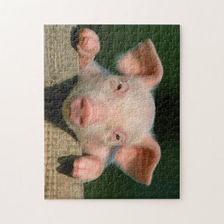 Pig farm - pig face jigsaw puzzle