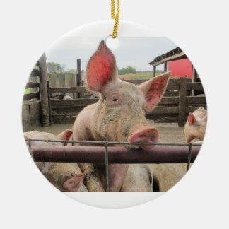 Pig Greeting Round Ceramic Decoration