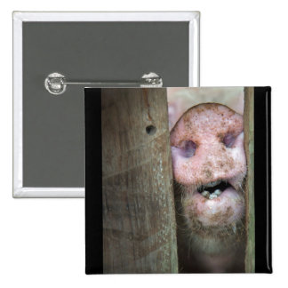 pig in pinback buttons