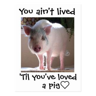 Pig lovin' postcard