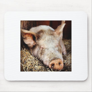 Pig of leisure mouse pad