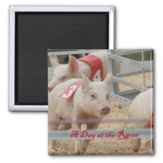 Pig racing, Pig race photograph, pink pig Square Magnet