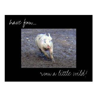 'Pig Run Wild' photo postcard