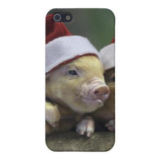 Pig santa claus - christmas pig - three pigs iPhone 5/5S case