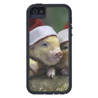 Pig santa claus - christmas pig - three pigs iPhone 5 case