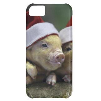 Pig santa claus - christmas pig - three pigs iPhone 5C case