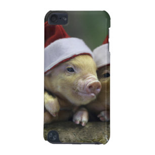 Pig santa claus - christmas pig - three pigs iPod touch 5G cover