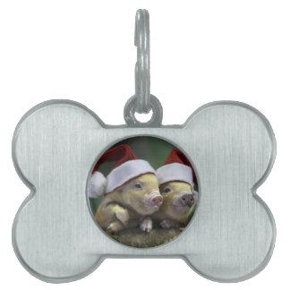 Pig santa claus - christmas pig - three pigs pet ID tag