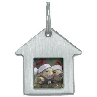Pig santa claus - christmas pig - three pigs pet tag