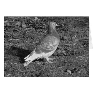 Pigeon at Roath Park Lake Cardiff (BW) Greeting Card