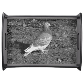Pigeon at Roath Park Lake Cardiff (BW) Serving Tray