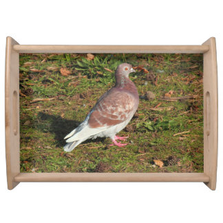 Pigeon at Roath Park Lake Cardiff Food Trays