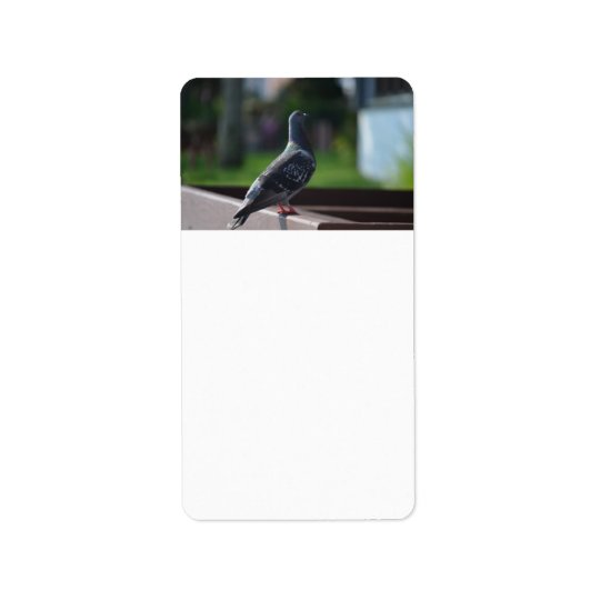 pigeon bird feather animal creature address label