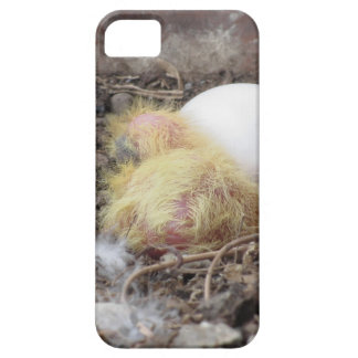 Pigeon chick in the nest with his brother egg iPhone 5 cover