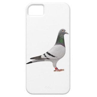 pigeon design iPhone 5 cases