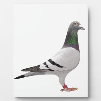 pigeon design plaque