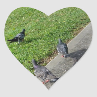 pigeon family reunion.JPG Heart Sticker