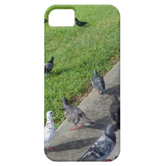 pigeon family reunion.JPG iPhone 5 Cases
