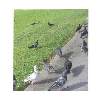 pigeon family reunion.JPG Notepads