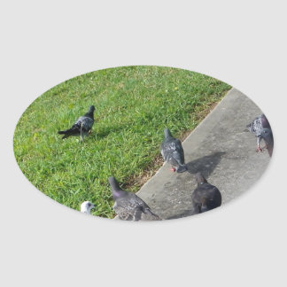 pigeon family reunion.JPG Oval Sticker